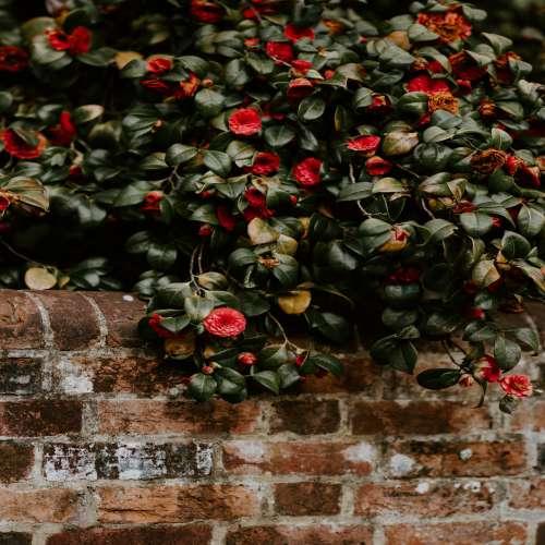 دسته گل رز مشکی و قرمز
