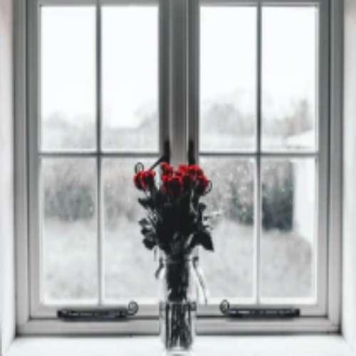 رز قرمز عکس پروفایل گل سیاه