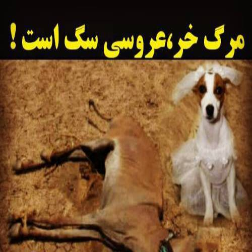 مرگ خر،عروسی سگ است